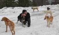 SOKAK KÖPEKLERİ - Köpekleri Doyurmak İçin Her Gün 50 Kilometre Gidiyor