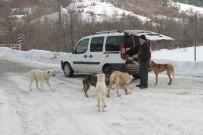 Köpeklerin Karnını Doyurmak İçin Her Gün 50 Kilometre Yol Gidiyor