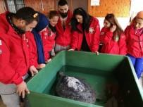 DENİZ KAPLUMBAĞALARI - Mersin'de Carettaların Yuvalama Alanı Temizlendi