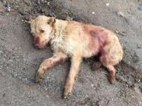 SOKAK KÖPEĞİ - Ölü Bulunan Köpeğin Tüfekle Vurulduğu Ortaya Çıktı