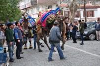 Pehlivan Develer Milas'ta Görücüye Çıktı