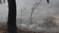 ORMAN YANGINI - Adana'da Orman Yangını