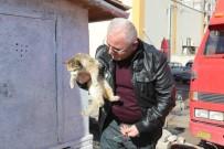 Muhtar, Kediler İçin Yuva Yaptı