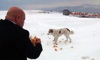 CENGIZ ŞAHIN - Tatvan'da Yaban Ve Sokak Hayvanları İçin Yem Bırakıldı