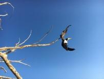 GENÇLIK PARKı - Ağaçta Asılı Kalan Karabatak Kurtarıldı