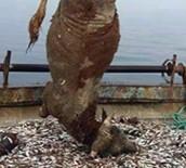 BALIK TUTMAK - Balıkçılar ağı çektiklerinde şoku yaşadı