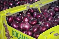 ÜRDÜN - Mor Soğan Arap Ülkelerine İhraç Ediliyor