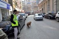 SOKAK KÖPEĞİ - Parkmetreci Köpek Yaptıklarıyla Görenleri Şaşırtıyor