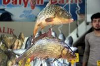 ALABALIK - Balık Fiyatları Düştü Ama Kalkan Hala Cep Yakıyor