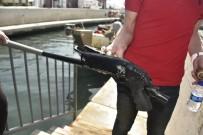 GÜVERCINLIK - Bodrum'da Deniz Dibinden Pompalı Tüfek Çıktı