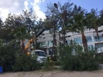 BEACH - Çam Ağaçlarının Kuruma Nedenini Mahkeme Tespit Etti