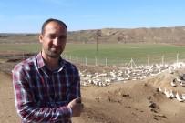 İnşaat Mühendisi Kaz Çiftliği Kurdu