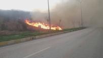 ORMAN YANGINI - İskenderun'da Orman Yangını