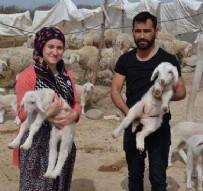 Sertifikalı çobanlar, sürü sahibi oldu