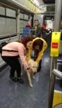 OTOBÜS ŞOFÖRÜ - Yağmurdan Kaçan Sokak Köpeği Belediye Otobüsüne Sığındı
