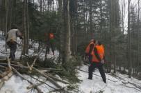 HASAN KESKIN - Ormanda Sıklık Bakımı Ve Işık Boşaltma Kesimi
