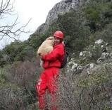 ÇOBAN KÖPEĞİ - 600 Metre Yükseklikteki Uçurumdan Kurtardıkları Yaralı Kangalı Sırtlarında Taşıdılar