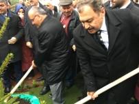 SUAT DERVIŞOĞLU - Bakan Eroğlu, Ümraniye'de Fidan Dikti