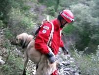 ÇOBAN KÖPEĞİ - Yaralı Kangalı 2 Saat Boyunca Sırtlarında Taşıdılar