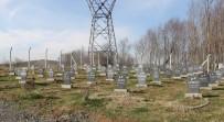 HAYVAN BARINAĞI - Bu Barınakta Hayvan Mezarlığı Var