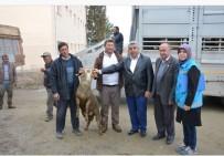 TARIM VE HAYVANCILIK BAKANLIĞI - Hisarcık'ta Genç Çiftçilere Hayvan Desteği