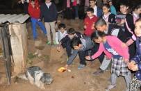 SOKAK HAYVANLARI - Öğrenciler Biriktirdikleri Paralarla Sokak Hayvanlarını Besledi