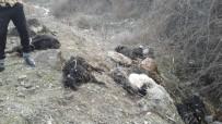 35 keçi kayalıklardan atladı