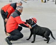 TATBIKAT - 5 Köpek Hayat Kurtarmak İçin Eğitiliyor