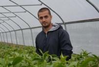 19 MAYIS ÜNİVERSİTESİ - Genç çiftçinin yüzünü zambak güldürdü!