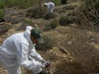 FEROMON - Mersin Ormanlarında Zararlı Böceklere Karşı Biyolojik Mücadele Başladı
