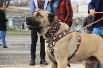 KANGAL KÖPEĞİ - Türk Eylemcilere Köpekle Müdahale Eden Hollanda'ya Kangallı Tepki