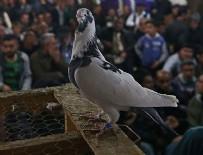 CEYHAN - 'Oyun' için değil 'güvercin' için geliyorlar