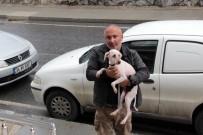 YAŞAM MÜCADELESİ - Konteynırda Bulunan Köpeğin Sağlık Durumu İyi