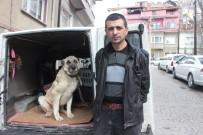 HAYVAN HAKLARı FEDERASYONU - Yaralı Ve Hasta Köpek Tedavi İçin Eskişehir'e Gönderildi
