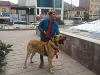 KANGAL KÖPEĞİ - Hollanda'yı Kangal Köpekleri İle Protesto Ettiler