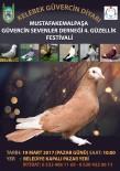 FESTIVAL - M. Kemalpaşa'da Güvercin Festivali