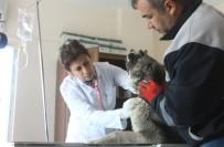 SOKAK HAYVANLARI - Hayvan Rehabilitasyon Merkezi Yenilendi