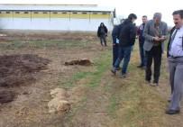 ZABITA MEMURU - Kütahya'daki Toplu Köpek Ölümleri