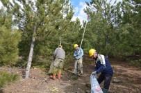 ÇAM KESE BÖCEĞİ - Kütahya Orman Bölge Müdürlüğü Çam Kese Böceğine Savaş Açtı