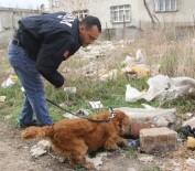 KORSAN GÖSTERİ - Narkotik Köpeği Coco, Taş Altından Uyuşturucu Zulası Buldu