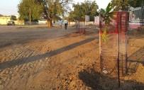 MANGO - Sudan'da Mango Meyvesi Tanıtım Ve Yetiştiriciliğine Destek