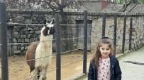 FARUK YALÇIN HAYVANAT BAHÇESİ - Darıca Hayvanat Bahçesi Abhaz Çocukları Ağırladı