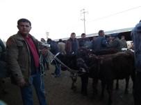 CELEP - Efeler Hayvan Pazarına Yoğun İlgi