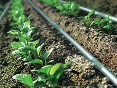 Erzincan'da 56 Çiftçi Hibe Almaya Hak Kazandı