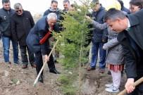 OKSIJEN - Orman Haftası'nda 12 Bin Fidan Dikildi