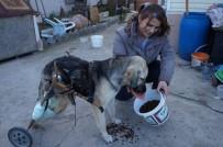 Araba Çarpan Köpeğe Pazar Arabasından Yürüteç Yaptı