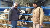 Burhaniyeli Kahveci Halo Süt Servisi Kurdu