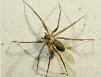 WASHINGTON - Felç tedavisine örümcek zehri