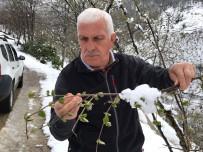 MUSTAFA ŞAHİN - Kar Yağışı Fındığa Yaradı