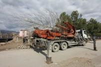 GÖBEL - Osmancık'ta Kızılırmak Sahilindeki Ağaçlar Taşınıyor